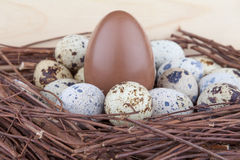 Small quail eggs and big chocolate egg. In wooden nest Stock Image