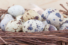 Small quail eggs. In wooden nest Royalty Free Stock Image