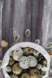 Small quail eggs wooden table dish  scattered database Royalty Free Stock Image