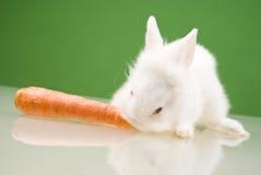Small rabbit Royalty Free Stock Photography