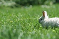 Small rabbit Stock Photos