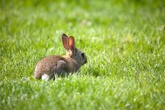 Small rabbit Stock Photos