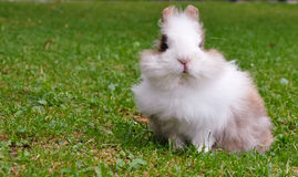 Small rabbit. The small rabbit sits on a green grass Royalty Free Stock Photos