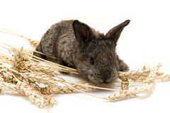 Small rabbit Stock Image