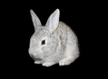 Small rabbit Royalty Free Stock Photos