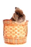 Small rabbit in basket. Royalty Free Stock Photos