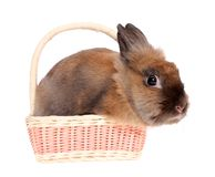 Small rabbit in a basket. Stock Photo