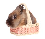 Small rabbit in a basket. Stock Image