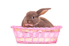 A small rabbit in a basket Stock Photos