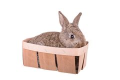 A small rabbit in a basket isolated Stock Image