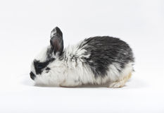 Small rabbit. Black and white small rabbit isolated on white background Stock Images