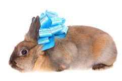 Small rabbit with a bow. Royalty Free Stock Photo