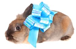 Small rabbit with a bow. Stock Photography