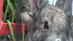 Small rabbit in the cage (1) stock video footage