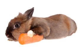 Small rabbit with a carrots. Stock Images