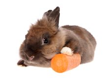 Small rabbit with a carrots. Royalty Free Stock Photo