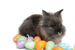 The small rabbit and colourful easter eggs Royalty Free Stock Photos