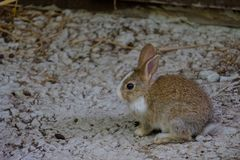 The small rabbit. Is crouching on the floor Stock Photo