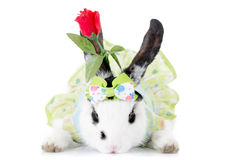 Small rabbit IN A DRESS with flower Stock Photography