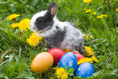 The small rabbit and easter eggs. The small rabbit and colourful easter eggs in a grass stock photos