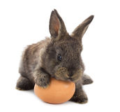 Small rabbit with egg Stock Photos