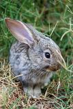 Small rabbit in grass Stock Photography