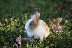 Small rabbit Royalty Free Stock Photography