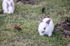 Small rabbit on the green grass Stock Image