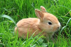 Image result for Small rabbit pictures