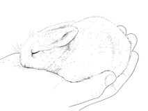 Small rabbit on hand Stock Photography