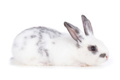 Small rabbit Stock Images