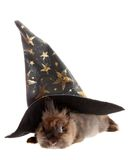 Small rabbit in a magic cap. Royalty Free Stock Images