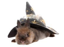 Small rabbit in a magic cap. Stock Images