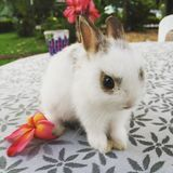 Small rabbit Royalty Free Stock Image