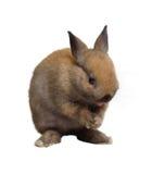 Small rabbit standing. Stock Photo