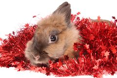 Small rabbit with tinsel. Stock Images