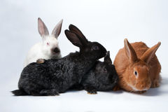 Small rabbits. Four small pretty rabbits on white background Royalty Free Stock Photos
