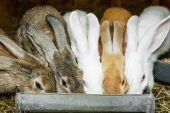 Small rabbits Royalty Free Stock Photos