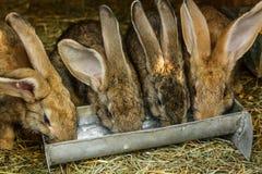Small rabbits Stock Photography