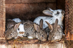 Small rabbits in the cage Royalty Free Stock Photo