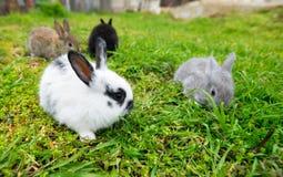 Small Rabbits eating grass Royalty Free Stock Photo