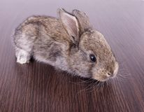 Small rabbits Stock Image