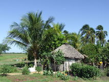 Small ranch. View of a nursery, in cuban country Stock Image