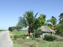 Small ranch. View of a nursery, in cuban country Royalty Free Stock Photography