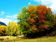 Small ranch in the fall royalty free stock image