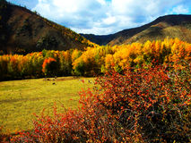Small ranch in the fall stock photos