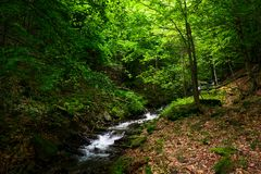 Small rapid brook in green forest. Beautiful nature background in summertime Royalty Free Stock Image