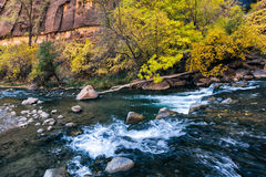 Small rapids on the Virgin River Royalty Free Stock Photos