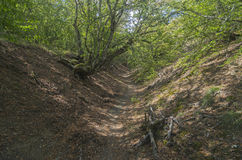 Small ravine in the Crimean mountains. Stock Images