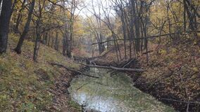 Small ravine in a quiet autumn forest, filled with water